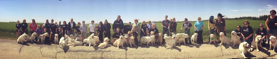 Over 35 dogs and Strike Golden families in attendance. We had a fantastic time!